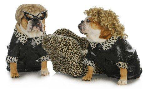 http://www.dreamstime.com/stock-photo-diva-dogs-image27890110