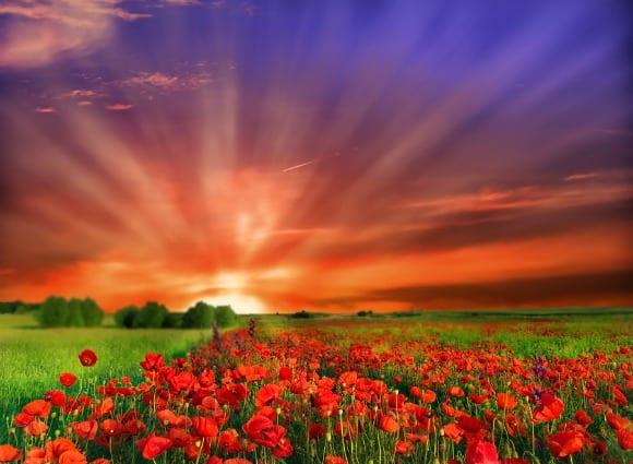 bigstock-Flowers-27077042