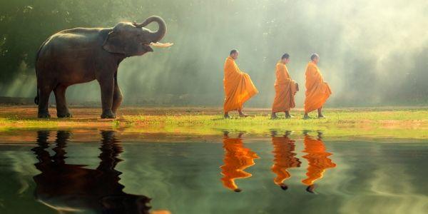 letting-go-buddhism